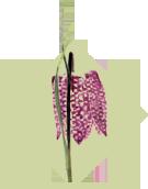 CPIE Flore des Landes
