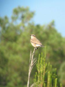 expertise naturaliste - Oiseaux - 1