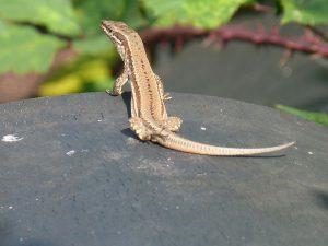 expertise naturaliste - Reptiles - 1